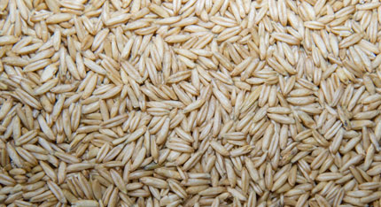 how to cook hulless barley
