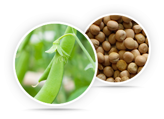 Organic Whole Yellow Peas